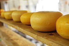 Si está buscando queso de Italia: queseros italianos