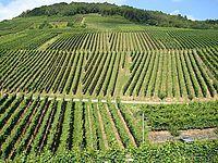 Vino del viticultor italiano y su bodega.